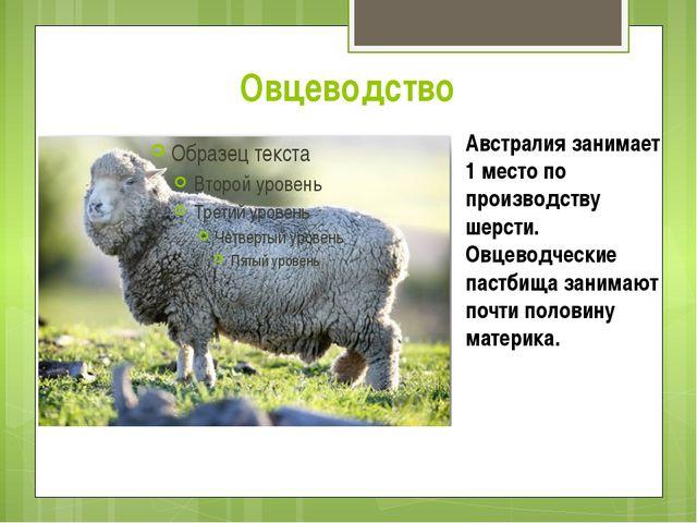 Овцеводство Австралия занимает 1 место по производству шерсти. Овцеводческие...