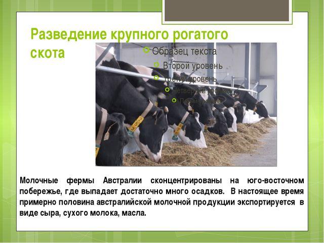 Разведение крупного рогатого скота Молочные фермы Австралии сконцентрированы...