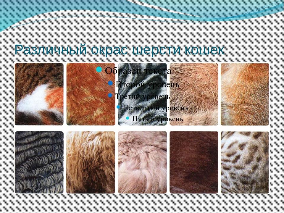 Различный окрас шерсти кошек