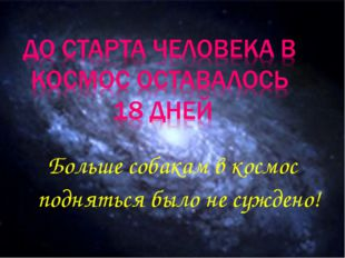 Больше собакам в космос подняться было не суждено!