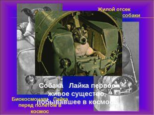 Биокосмонавт Лайка перед полетом в космос Жилой отсек космической собаки Соба