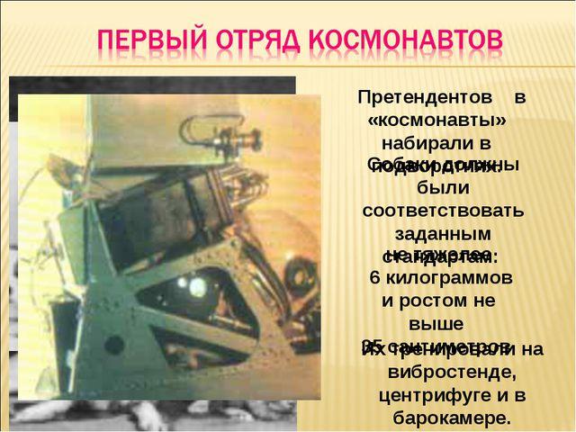 Претендентов в «космонавты» набирали в подворотнях. Собаки должны были соотв...