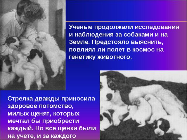 Ученые продолжали исследования и наблюдения за собаками и на Земле. Предстоял...