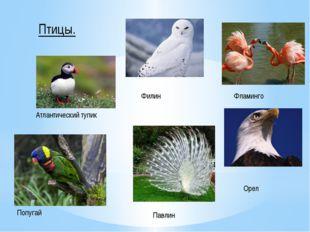 Птицы. Атлантический тупик Филин Фламинго Орел Павлин Попугай