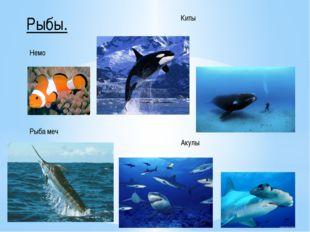 Рыбы. Немо Рыба меч Акулы Киты
