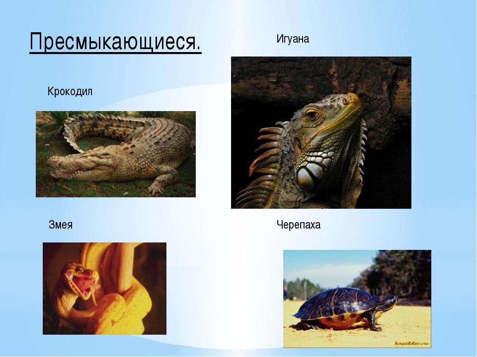 Пресмыкающиеся. Крокодил Змея Игуана Черепаха