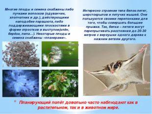 Многие плоды и семена снабжены либо пучками волосков (одуванчик, хлопчатник и