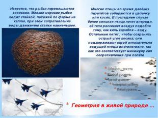Известно, что рыбки перемещаются косяками. Мелкие морские рыбки ходят стайкой