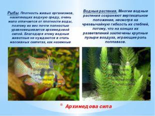 Рыбы. Плотность живых организмов, населяющих водную среду, очень мало отличае
