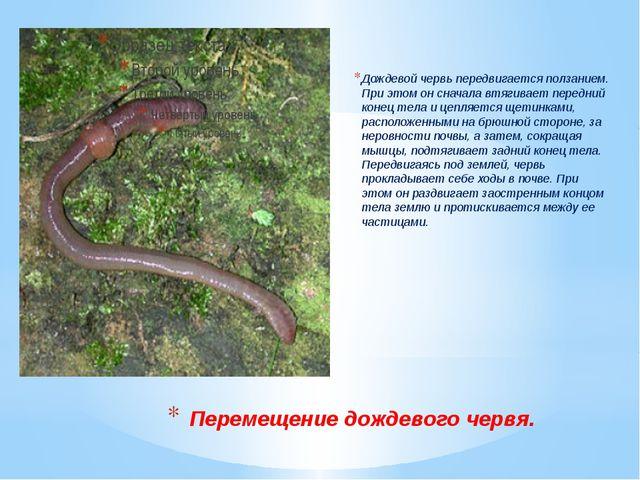 Перемещение дождевого червя. Дождевой червь передвигается ползанием. При этом...