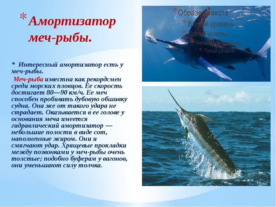 Амортизатор меч-рыбы. * Интересный амортизатор есть у меч-рыбы. Меч-рыба изве...