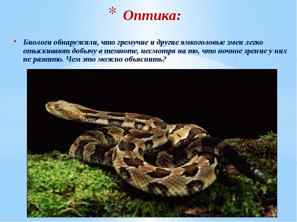 Биологи обнаружили, что гремучие и другие ямкоголовые змеи легко отыскивают д...