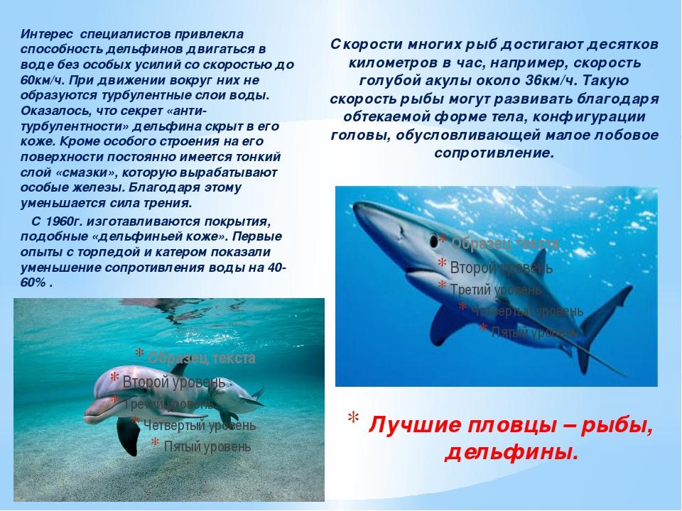 Интерес специалистов привлекла способность дельфинов двигаться в воде без осо...
