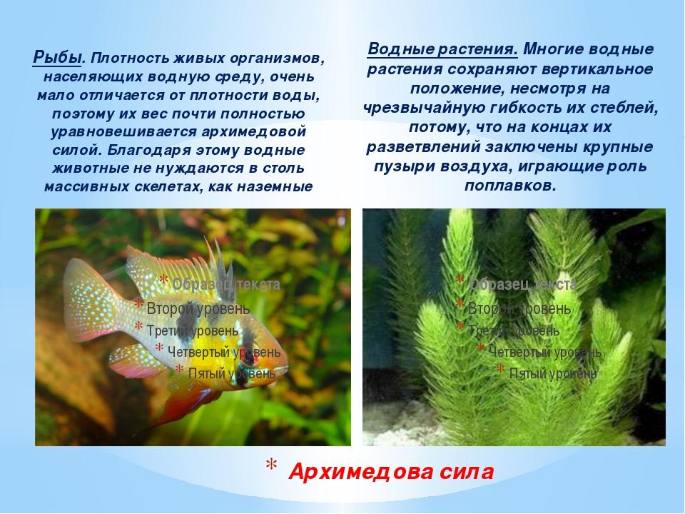 Рыбы. Плотность живых организмов, населяющих водную среду, очень мало отличае...
