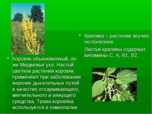 Крапива – растение жгучее, но полезное. Листья крапивы содержат витамины С, А