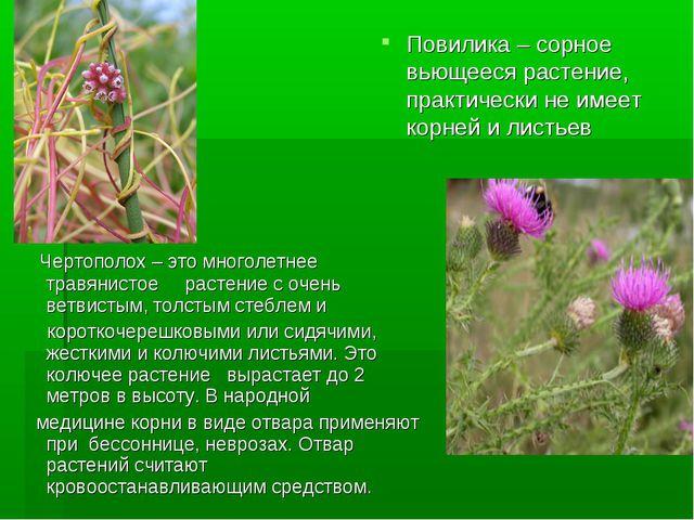 Повилика – сорное вьющееся растение, практически не имеет корней и листьев Че...