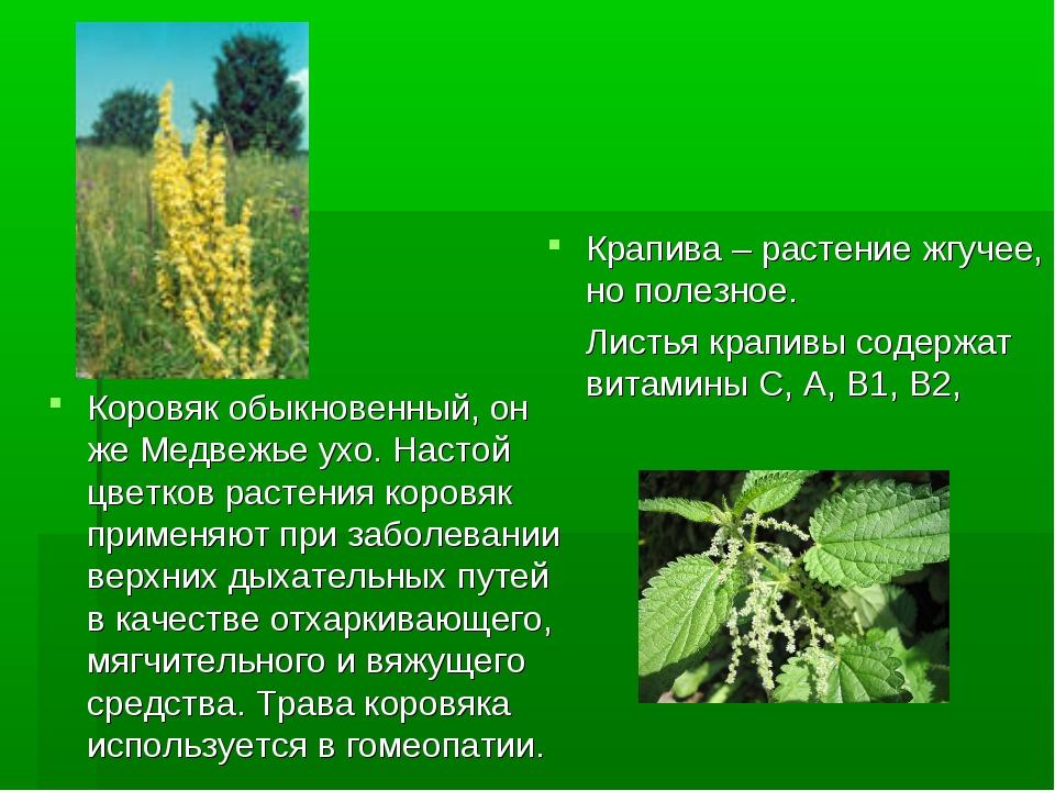 Крапива – растение жгучее, но полезное. Листья крапивы содержат витамины С, А...