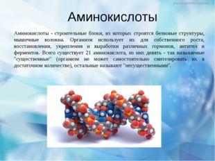 Аминокислоты Аминокислоты - строительные блоки, из которых строятся белковые
