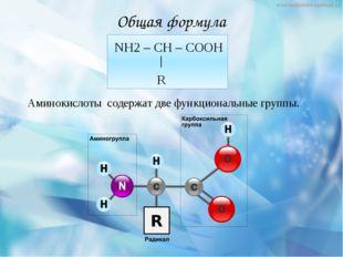 Общая формула NH2 – CH – COOH R Аминокислоты содержат две функциональные груп