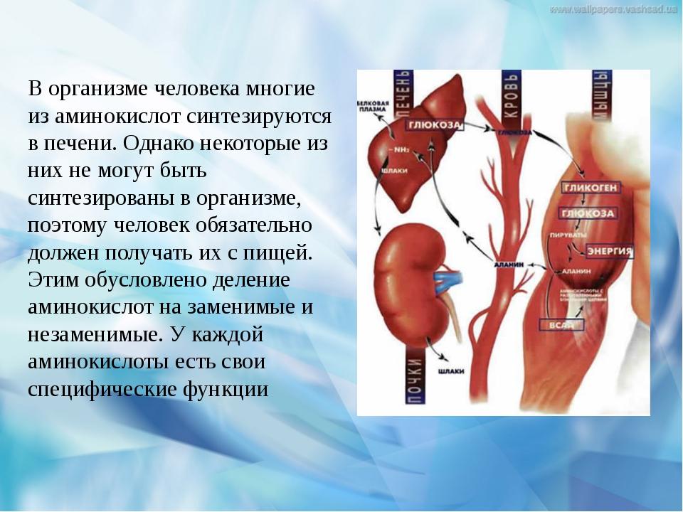 В организме человека многие из аминокислот синтезируются в печени. Однако нек...