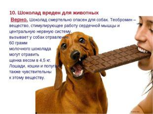 10. Шоколад вреден для животных Верно. Шоколад смертельно опасен для собак. Т