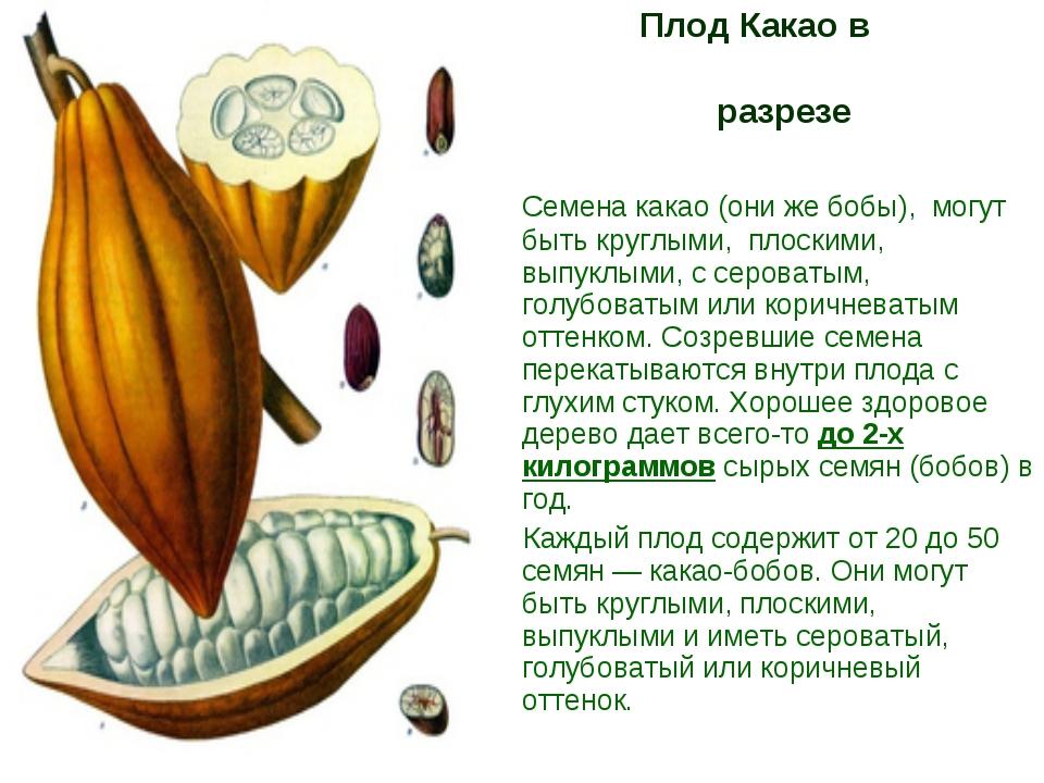 Плод Какао в разрезе Семена какао (они же бобы), могут быть круглыми, плоски...