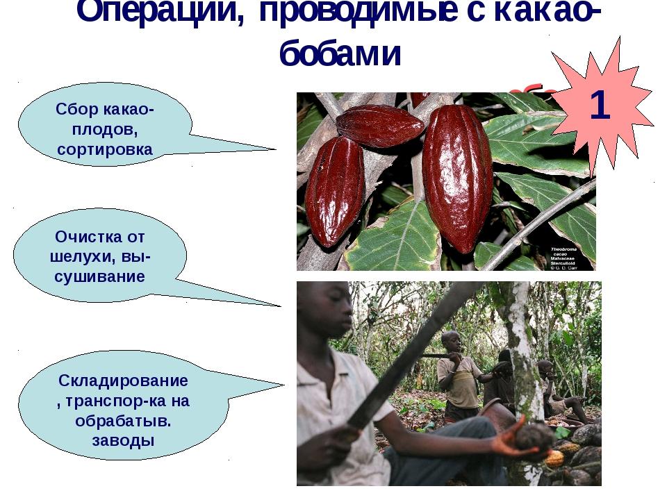 Операции, проводимые с какао-бобами сбор Сбор какао-плодов, сортировка Очистк...