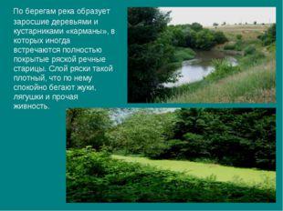 По берегам река образует заросшие деревьями и кустарниками «карманы», в кото
