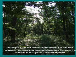 Лес – старый и заросший, давным-давно не чищенный, окутан некой таинственност