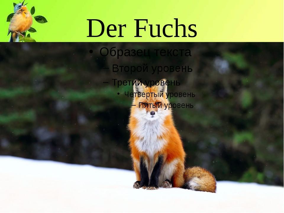 Der Fuchs