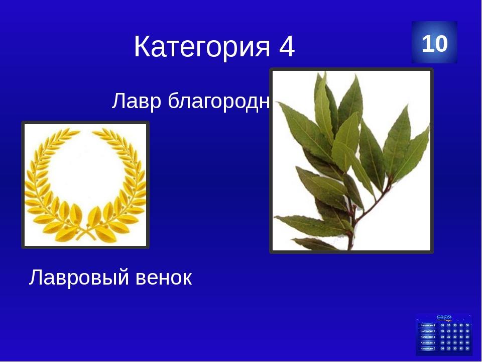 Категория 5 20 Храм Лысой Венеры Категория Ваш ответ