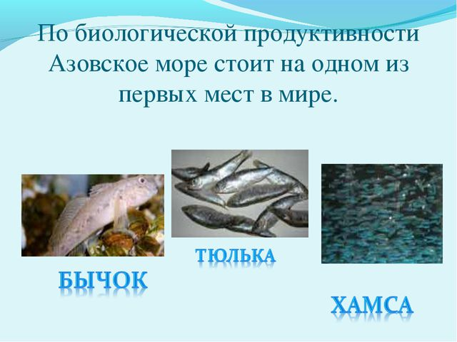 По биологической продуктивности Азовское море стоит на одном из первых мест...