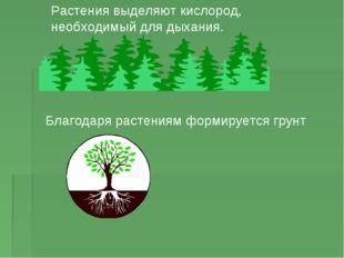 Растения выделяют кислород, необходимый для дыхания. Благодаря растениям форм