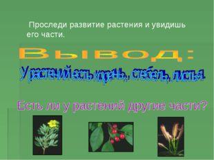 Проследи развитие растения и увидишь его части.
