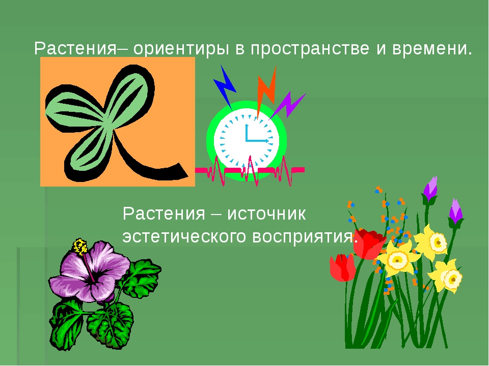 Почему растения называют зеленым чудом земли