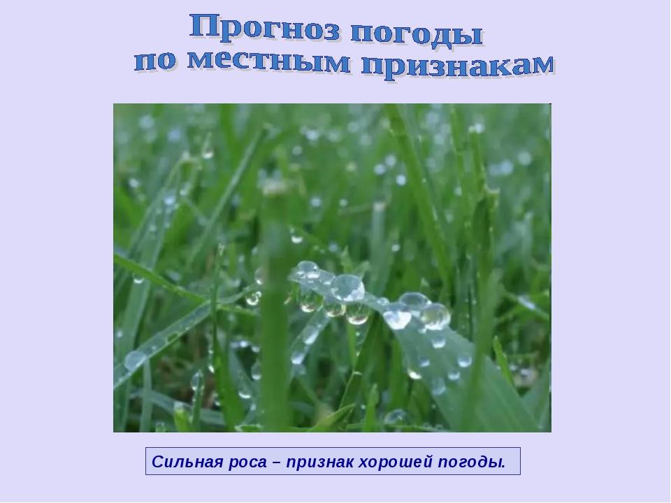 Сильная роса – признак хорошей погоды.