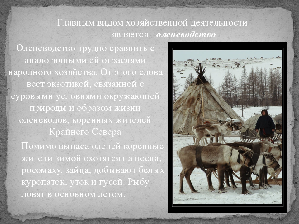Главным видом хозяйственной деятельности является - оленеводство Оленеводство...