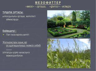 М Е З О Ф И Т Т Е Р «мезо» - орташа, «фитос» - өсімдік ТІРШІЛІК ОРТАСЫ: ылғал