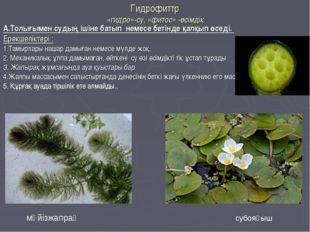 Гидрофиттр «гидро»-су, «фитос» -өсімдік А.Толығымен судың ішіне батып немесе
