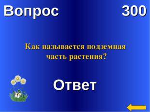 Вопрос 300 Ответ Как называется подземная часть растения?