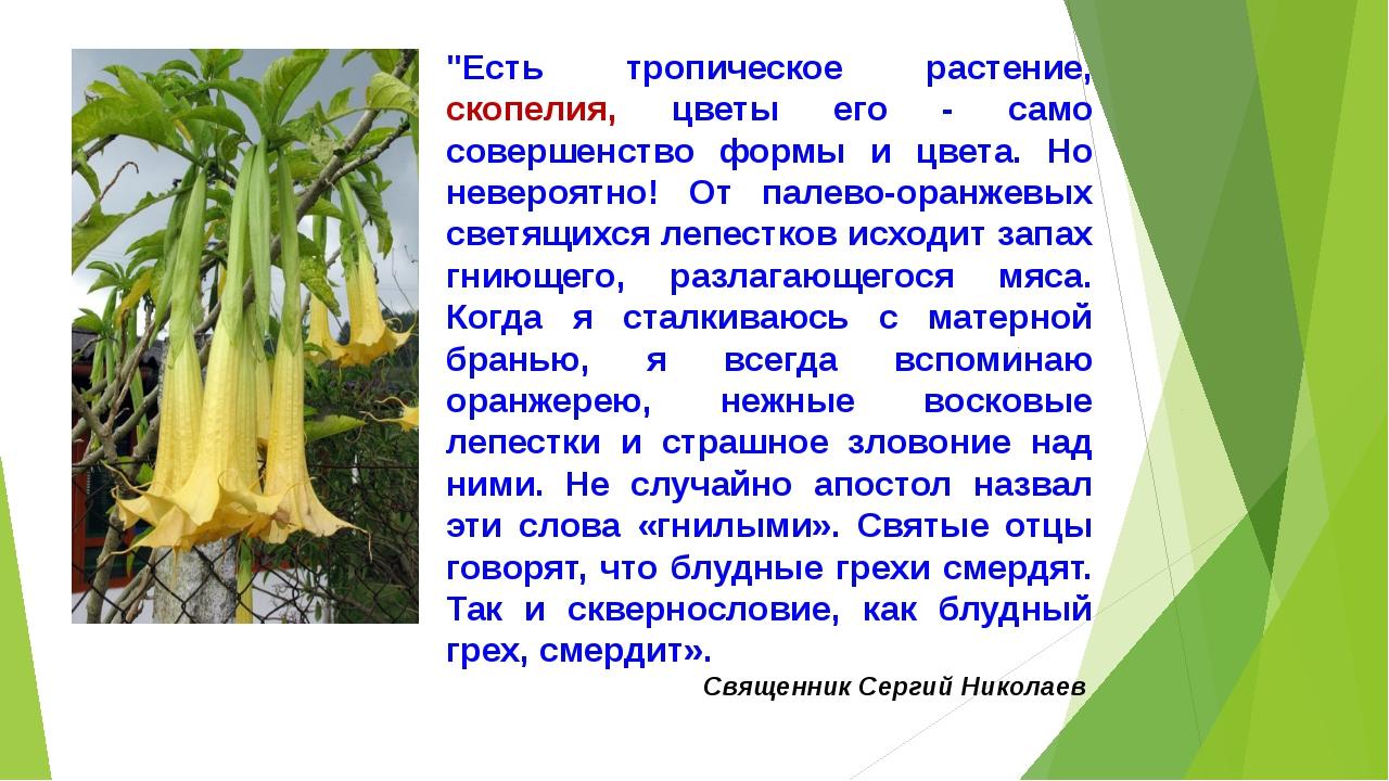 """""""Есть тропическое растение, скопелия, цветы его - само совершенство формы и..."""