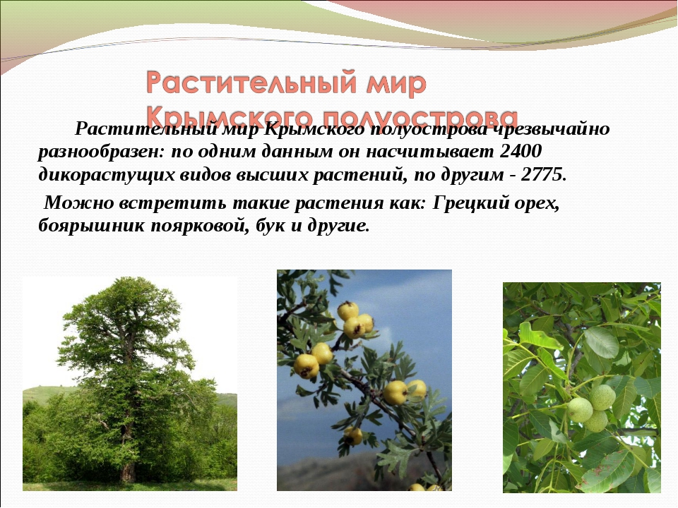 Растительный мир Крымского полуостровачрезвычайно разнообразен: по одним да...