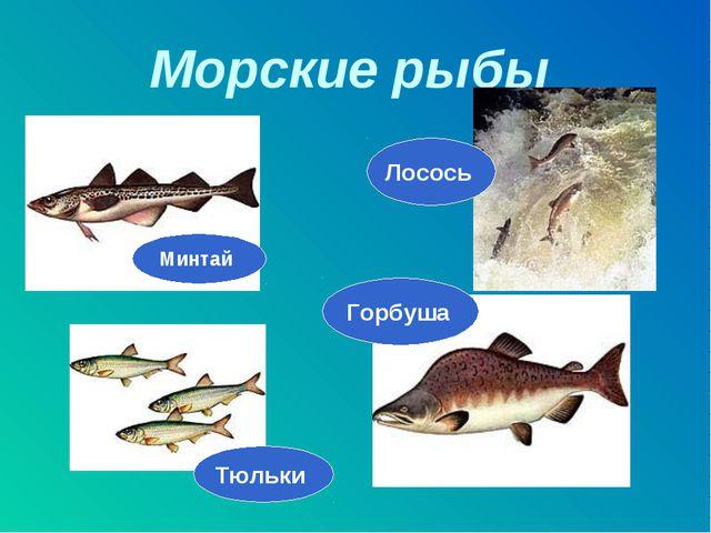 Морские рыбы Минтай Горбуша Лосось Тюльки
