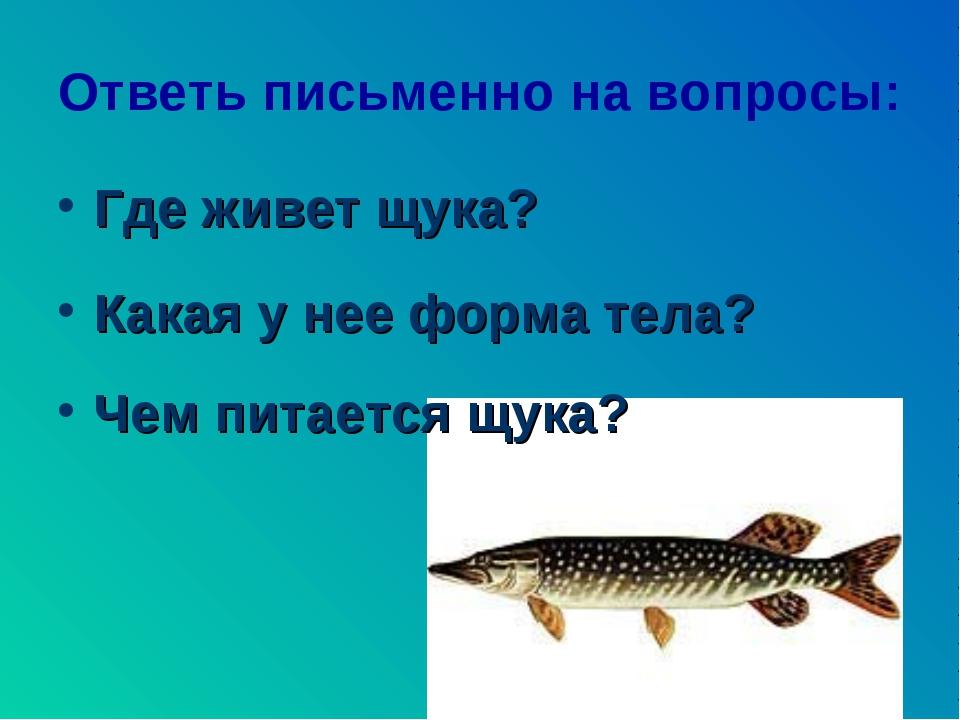 Ответь письменно на вопросы: Где живет щука? Какая у нее форма тела? Чем пита...