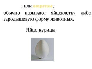 Яйцо́м, или ооцитом, обычно называют яйцеклетку либо зародышевую форму животн