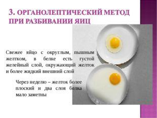 Через неделю – желток более плоский и два слоя белка мало заметны Свежее яйцо