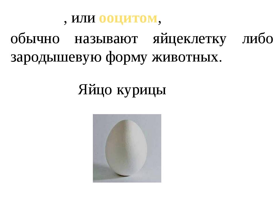 Яйцо́м, или ооцитом, обычно называют яйцеклетку либо зародышевую форму животн...
