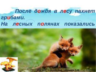 После дождя в лесу пахнет грибами. На лесных полянах показались лисички. ОШ