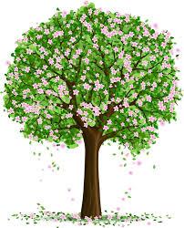 Картинки по запросу фото деревьев