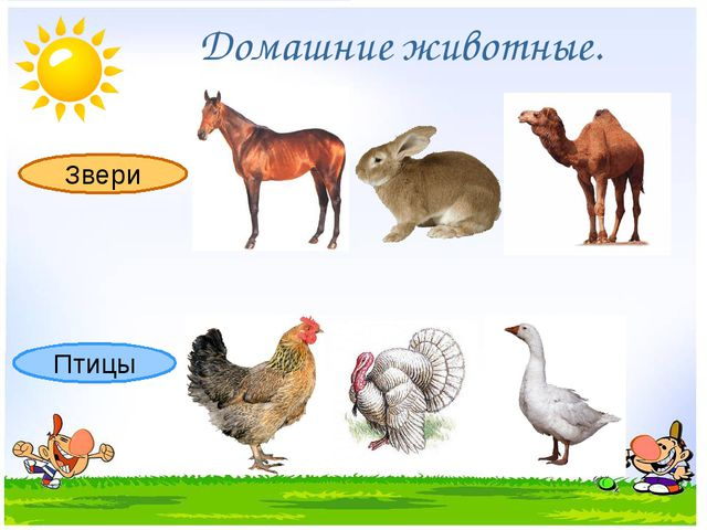Звери Птицы Домашние животные.
